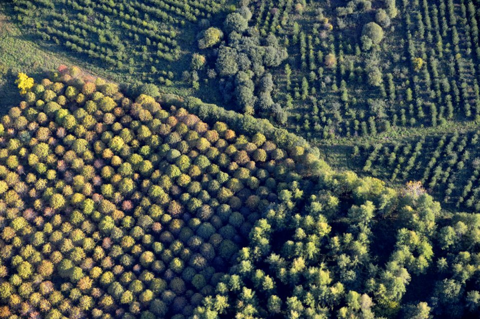 La forêt de Chabrières